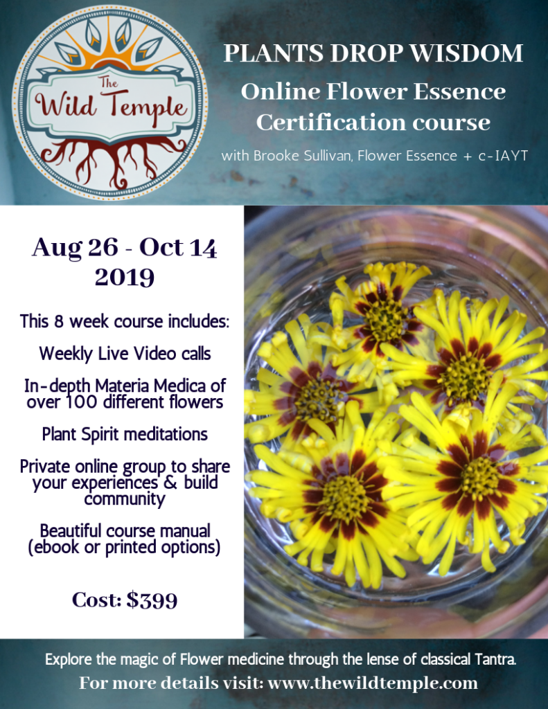 the wild temple flower essence certification course california online
